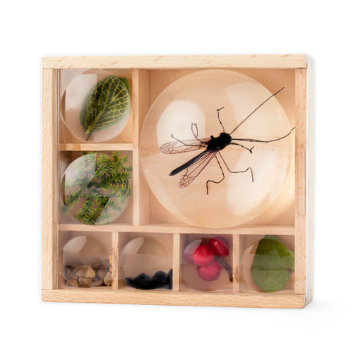 Huckleberry Bug Box Kit