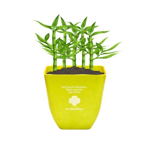 GSNCCP Volunteer Planter/ Desk Plan